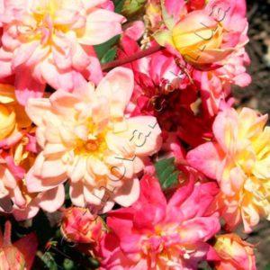 Цветение - непрерывное